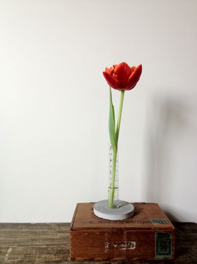 DIY Concrete Cylinder Vase Idea