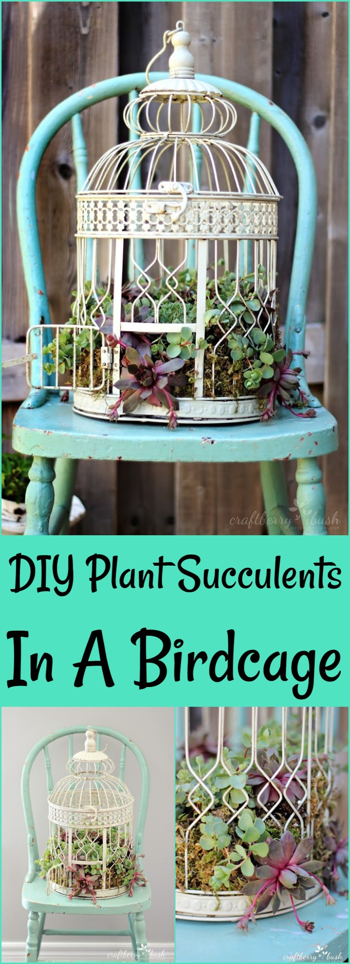 DIY Plant Succulents In A Birdcage