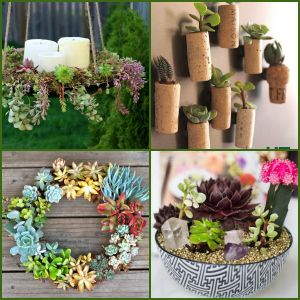 DIY Succulent Crafts