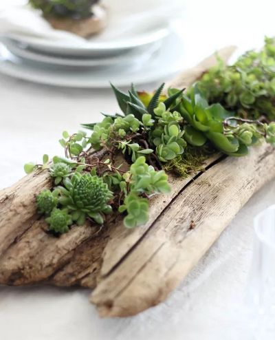 DIY Succulent Driftwood Planter Idea