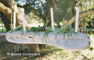 Driftwood Candelabra DIY Succulent Idea
