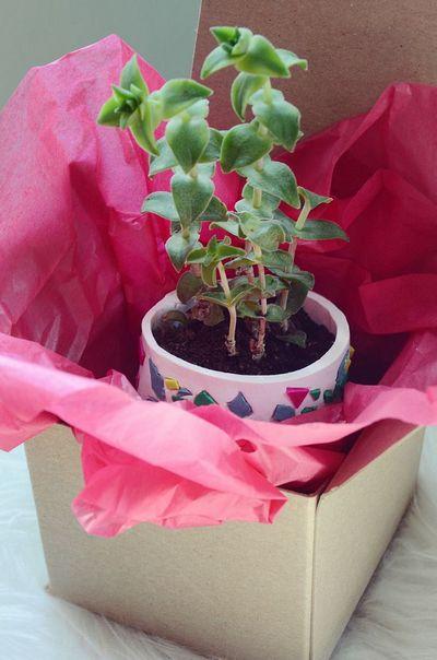Easy DIY Terrazzo Succulent Planter Idea