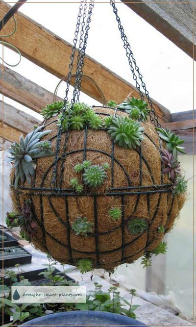 Punctuate your Garden with a DIY Succulent Sphere Idae