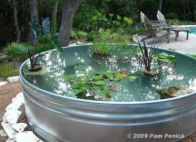 Make A DIY Container Pond In A Stock Tank