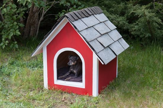 How to Build a DIY Dog House