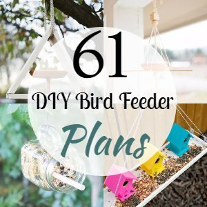 61 DIY Bird Feeder Plans