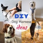 7 DIY Dog Harness ideas With Instriction