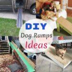 7 Best Inexpensive DIY Dog Ramps